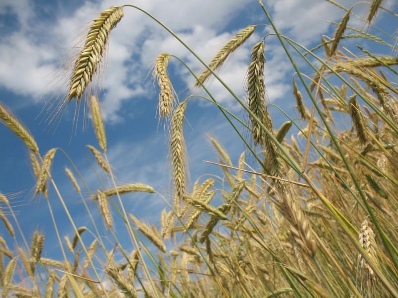 Grande foire agricole de Riez