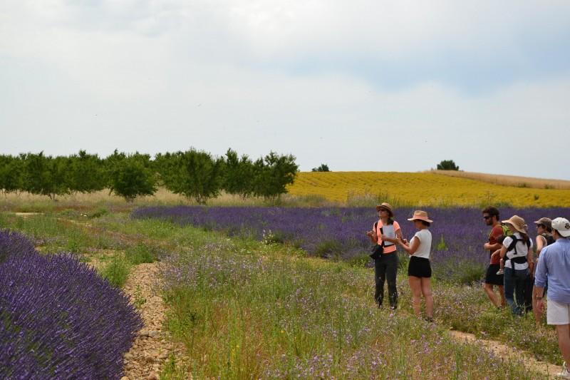 balade-lavande-reisetriptours-guide-urbain-et-nature-provence-5-221400