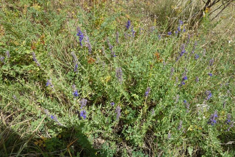 plantes-aromatiques-269341